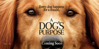 A Dogs Purpose (2017) movie poster #1468258