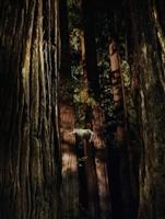 Woodshock movie poster