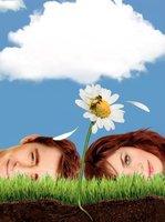 Pushing Daisies movie poster